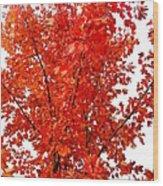 Red Lights Wood Print