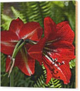 Red Lilies For Spring Wood Print