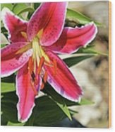 Red Lilly 8095 Wood Print