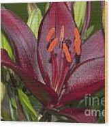 Red Lily 2 Wood Print