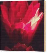 Red Lily At Night Wood Print