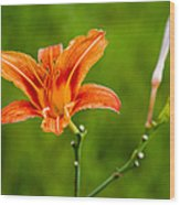 Red Lily - Featured 3 Wood Print