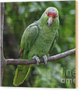 Red-lored Parrot On Branch Wood Print