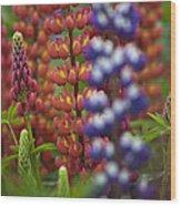Red Lupinus Wood Print