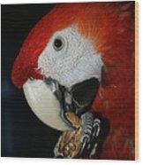 Red Macaw Wood Print