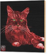 Red Maine Coon Cat - 3926 - Bb Wood Print
