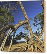 Red Mangrove Aerial Roots Wood Print
