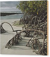 Red Mangrove Root Galapagos Islands Wood Print