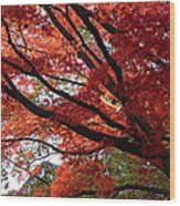 Red Maple 01 Wood Print