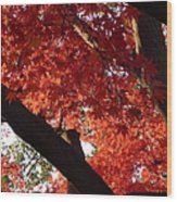 Red Maple 02 Wood Print