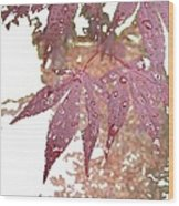 Red Maple Kissed By Water Wood Print
