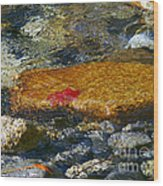 Red Maple Leaf In Stream Wood Print