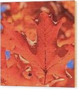 Peak Color Maple Leaves Wood Print