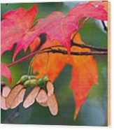 Red Maple Leaves Wood Print