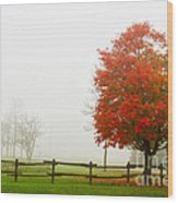 Red Maple Tree And A Split-rail Fence Wood Print