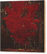 Red Maple Tree Too Wood Print