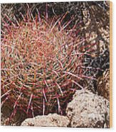 Red Mohave Barrel Cactus Wood Print