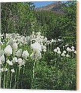 Red Mountain Beargrass Wood Print