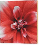Red N White- Viator's Agonism Wood Print