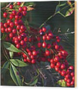 Red Nandina Berries - The Heavenly Bamboo Wood Print