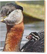 Red-necked Grebe And Chick Wood Print