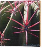 Red Needles On Barrel Cactus Wood Print