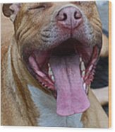 Red Nose Pit Bull Terrier Wood Print