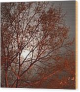 Red Oak At Sunrise Wood Print