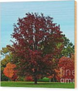 Red Oak In Loose Park Wood Print
