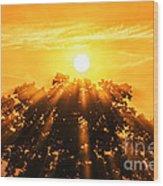 Red Oak Sunrise Fog Wood Print