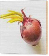 Red Onion With Sprout Wood Print