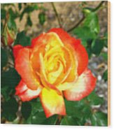 Red Orange And Yellow Rose Wood Print