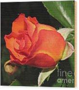 red orange Baby Rose Wood Print