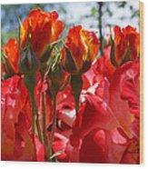 Red Orange Roses Art Prints Floral Photography Wood Print