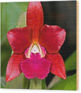 Red Orchid Wood Print