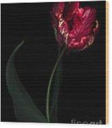 Red Parrot Tulip Wood Print
