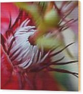 Red Passion Flower Stamens Wood Print
