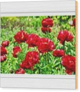 Red Peonis Wood Print