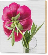 Red Peony Flower Back Wood Print