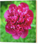 Red Peony Flower Wood Print by Edward Fielding