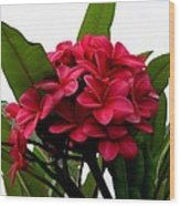 Red Plumeria Wood Print
