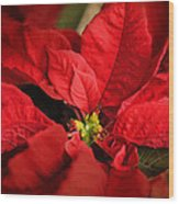 Red Poinsettia 2 Wood Print
