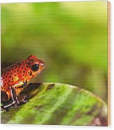 Red Poison Dart Frog Wood Print