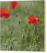 Red Poppies 2 Wood Print