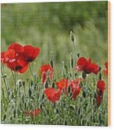 Red Poppies 3 Wood Print