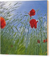 Red Poppies And Blue Sky Wood Print