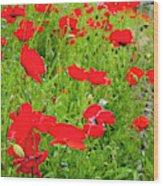 Red Poppies Flowers In Field Wood Print