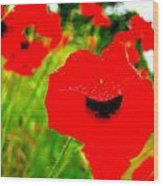 Red Poppies Wood Print by Mamie Gunning