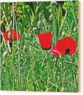 Red Poppies Near Meryem Ana Evi-cottage Believed To Be Mary's Last Home-turkey Wood Print