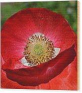 Red Poppy 3 Wood Print